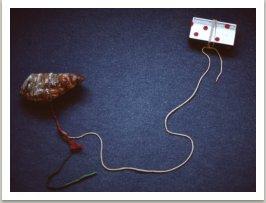 Vzájemné ovlivňování, 1981, rádio, maso